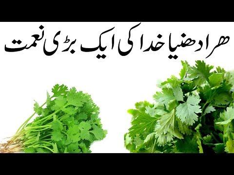 könnyű fogyás urdu nyelven