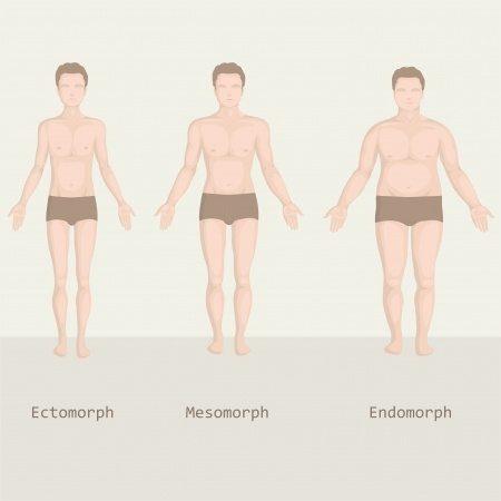 endomorf testtípus fogyni