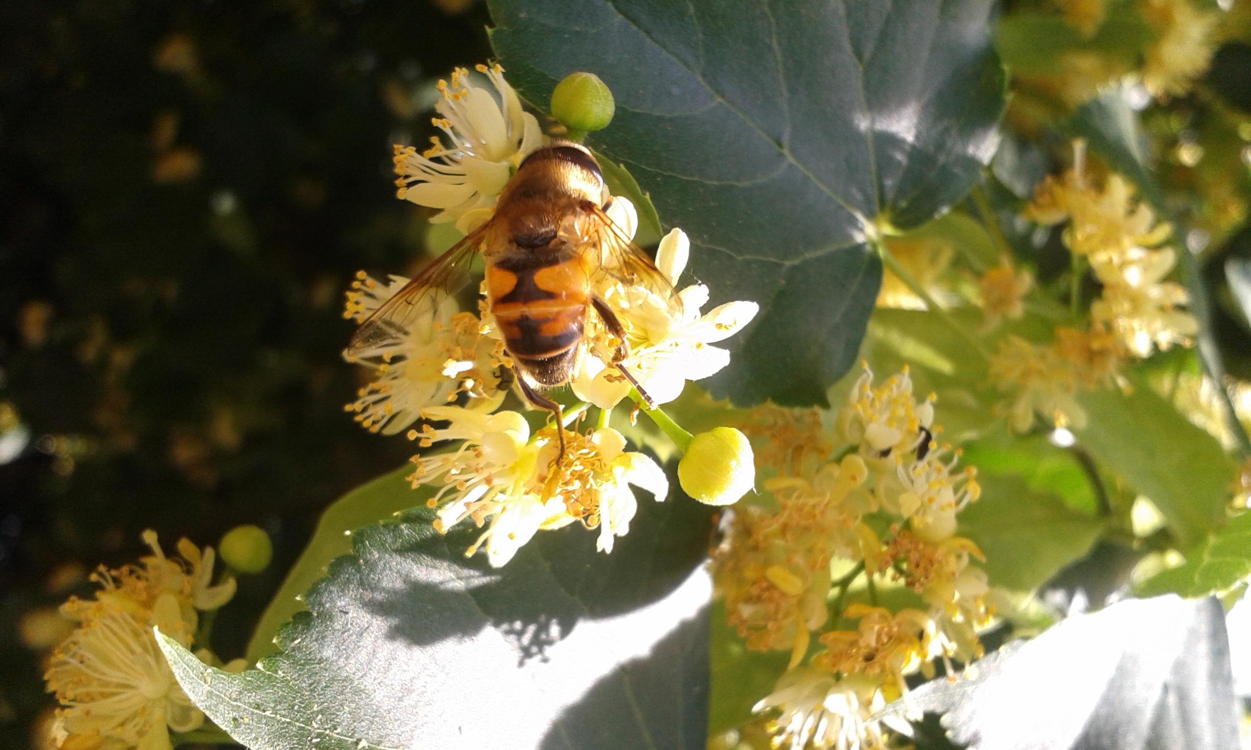 botanikai fogyókúra argentina)
