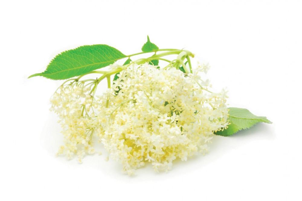 gyógynövények és ásványi anyagok, amelyek segítik a fogyást