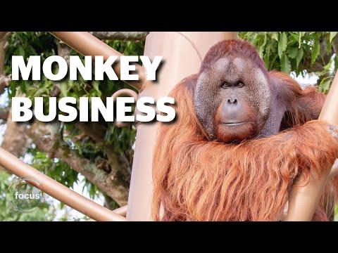 Fogyás egészségügyi majom