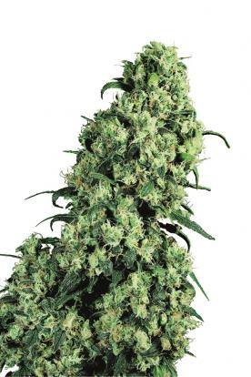 a marihuána lefogyhat-e)