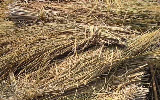 Zsírégető takarmány - Lucerna (Alfalfa)