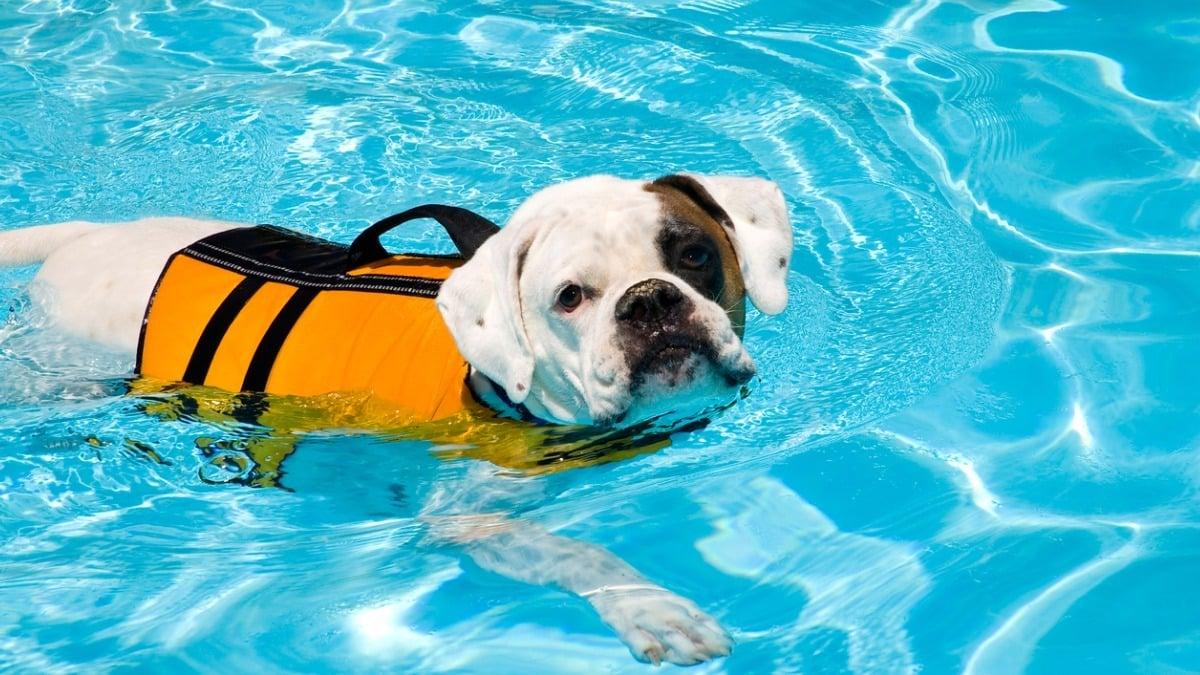 6 lehetséges ok a kutya hirtelen súlyvesztésére   Kutyaváfabianpack.hu