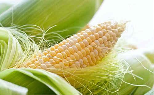 a kukoricaselyem fogyást okoz
