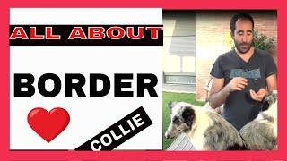 border collie - Index Fórum