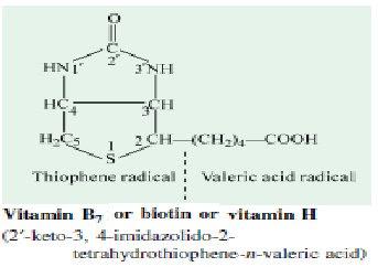 a biotin segíti a zsírvesztést)