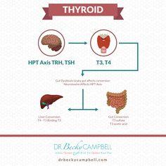 A túlsúly gyakori szervi oka: ha kezelik, a fogyás is beindul T3 vagy t4 a fogyáshoz
