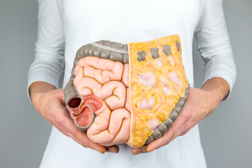 zsíréget a szervek körül