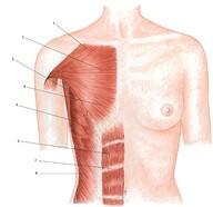 hipertrófia vs erősség zsírvesztés