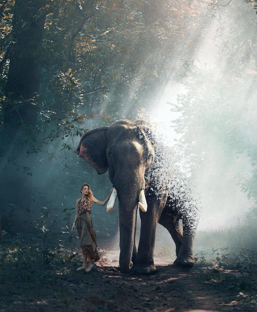 repülő elefánt fogyókúrás tea