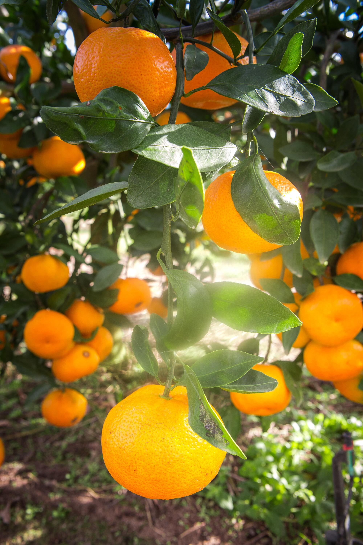 fogyás citrus megye fl)