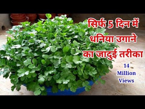 gyógynövényes tippek az urdu fogyáshoz)