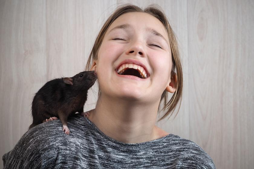 háziállat fogyni
